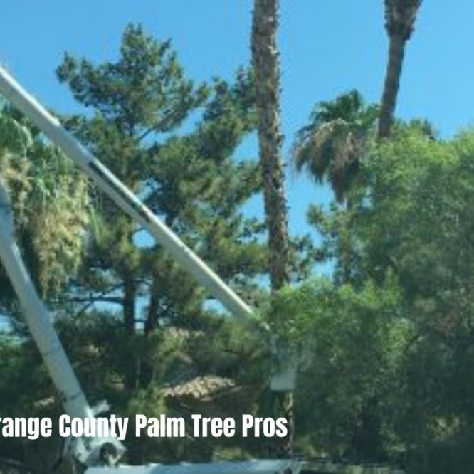 Why is it Important to Hire a Tree Service Provider?