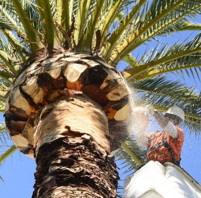 Top Three Factors In Choosing An Intensive Tree Care Service